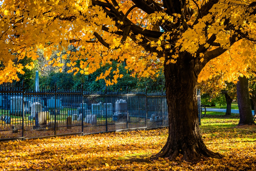 Autumn colors on a tree at the Gettysburg National Cemetary, Pennsylvania.